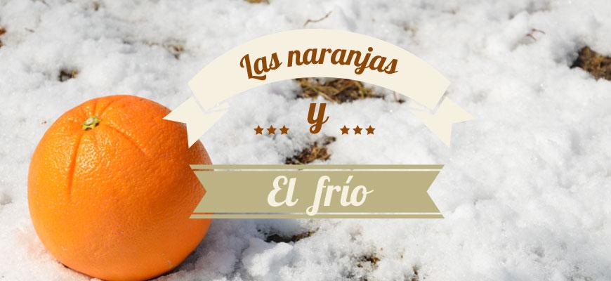 las_naranjas_y_el_frio